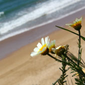 7 day tour of algarve